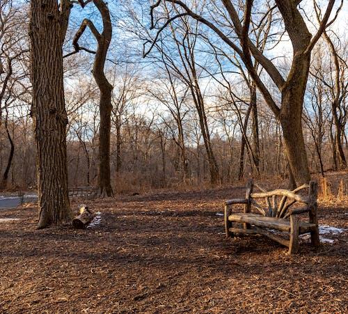 Ingyenes stockfotó central park, lombtalan fák, pad témában