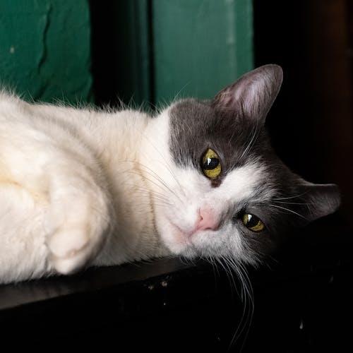 猫的脸照片