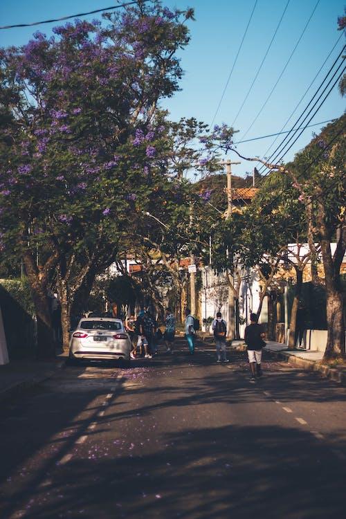 Základová fotografie zdarma na téma městský, portrét ulice, stromy, ulice
