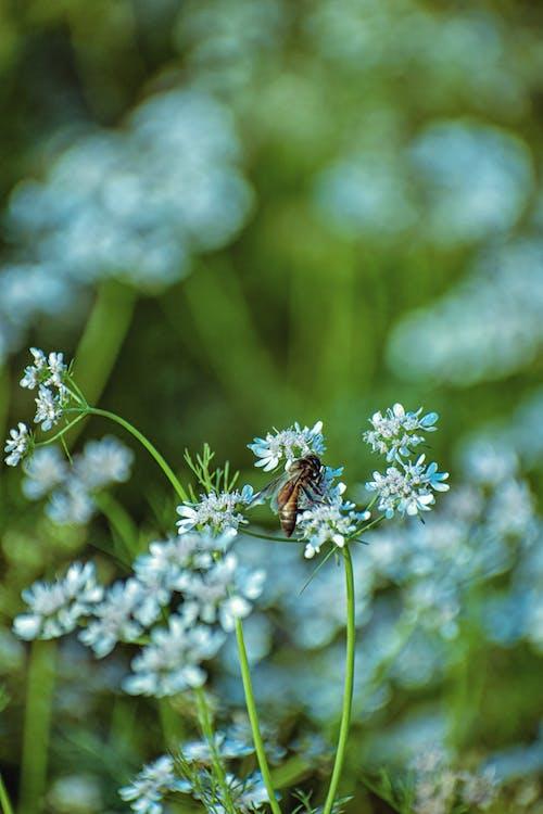 Бесплатное стоковое фото с белый цветок, красивые цветы, максросъемка, обои