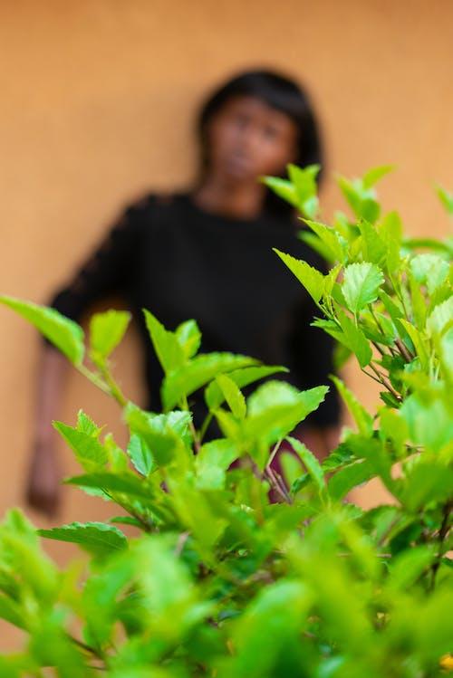 Ilmainen kuvapankkikuva tunnisteilla kasvi, kasvu, kuvan syvyys, lehdet