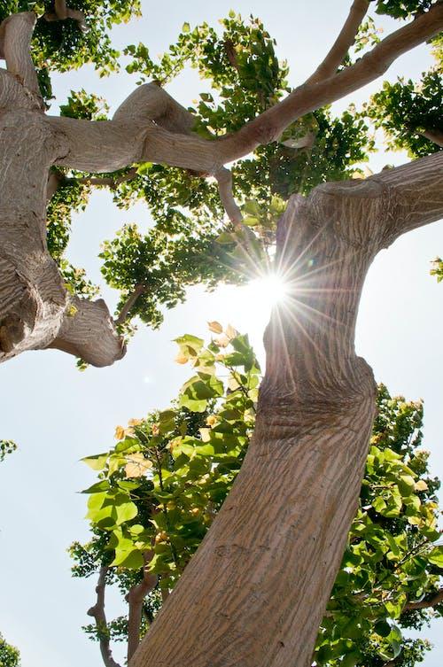 Free stock photo of san diego, tree