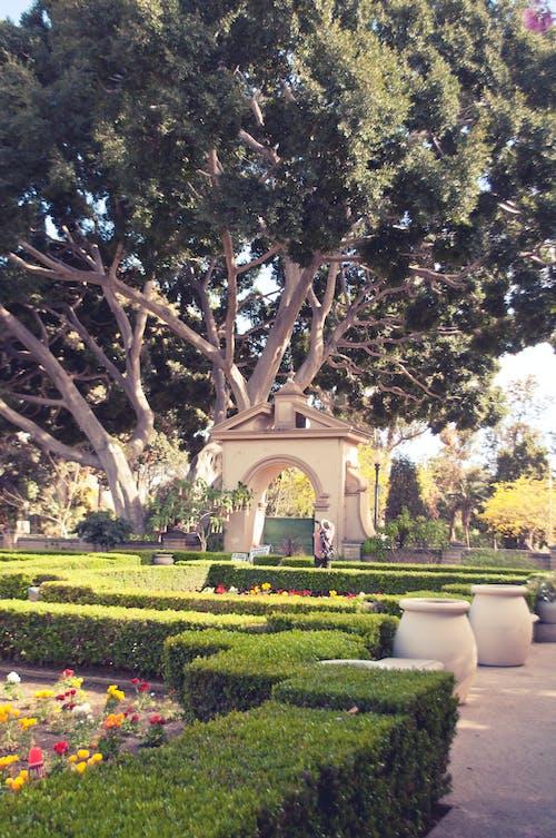 Free stock photo of balboa park, nature, park