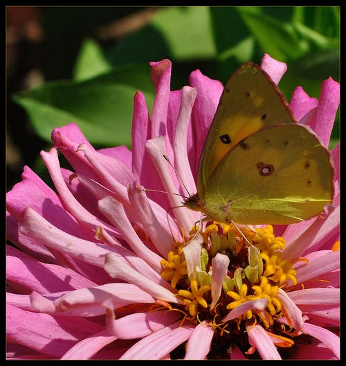 Free stock photo of butterfly, florida, flower
