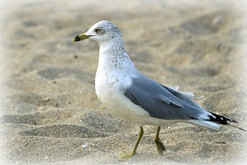 Free stock photo of beach, florida, seagull