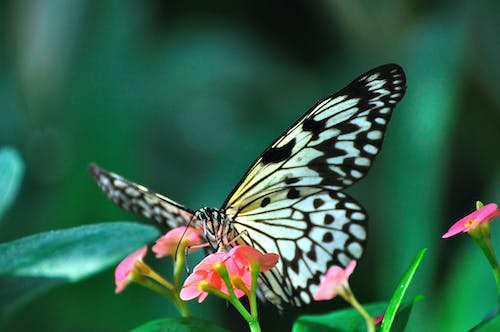 Free stock photo of butterfly, green