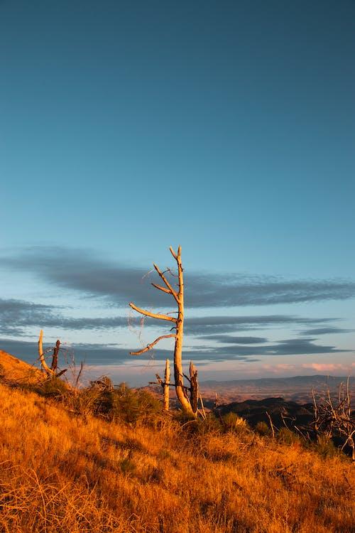 Foto profissional grátis de árvore, cor, dourado, montanha