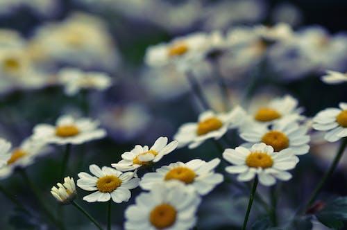 Free stock photo of flowers, macro