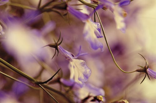 Free stock photo of flower, macro, vintage