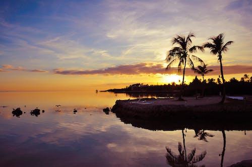 Free stock photo of beach, florida, palmtree