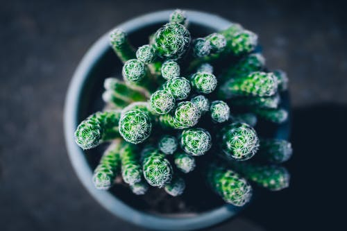 Top View Photo of Succulent Plant