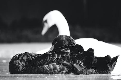 Free stock photo of bird, bird photography, india