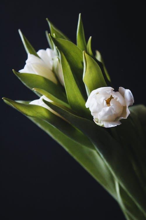 Bahar çiçekleri, Beyaz çiçekler, bitki örtüsü, bitkiler içeren Ücretsiz stok fotoğraf