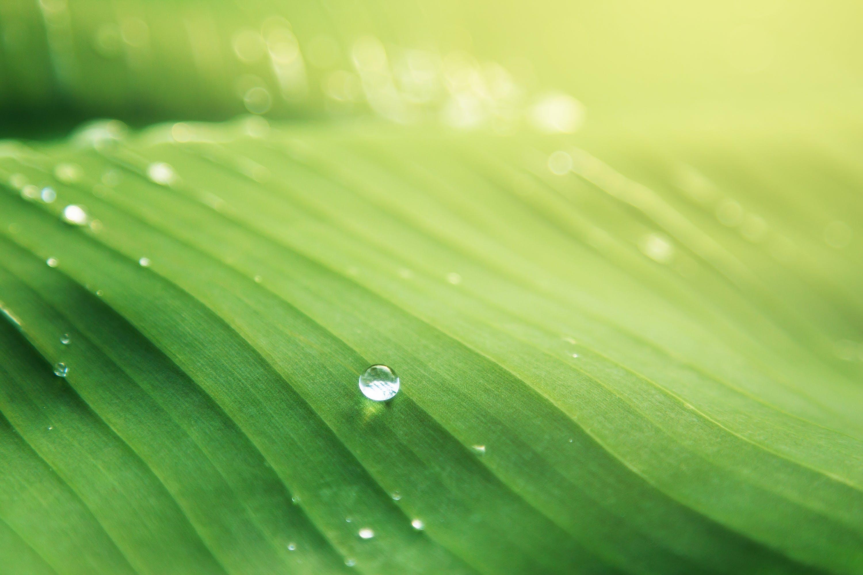 คลังภาพถ่ายฟรี ของ การเจริญเติบโต, ของเหลว, น้ำ, น้ำค้าง