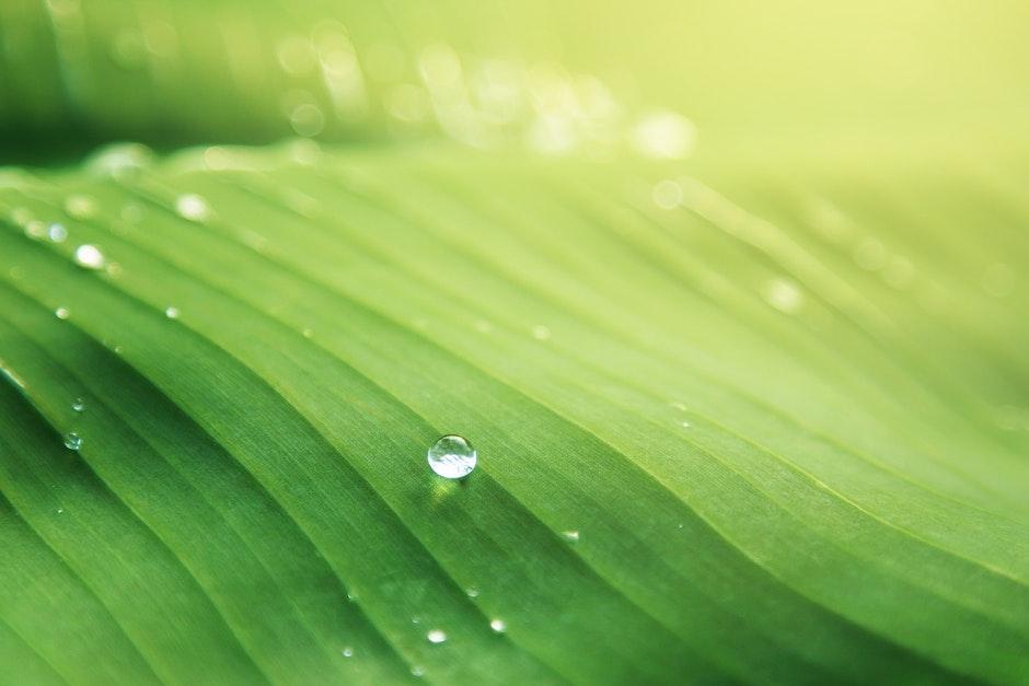banana leaf, blur, bright
