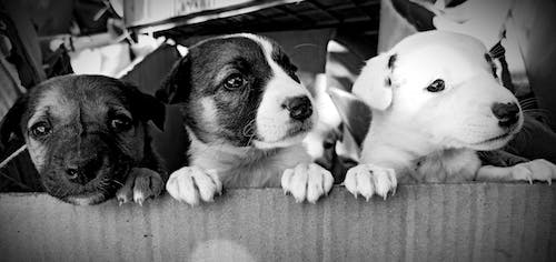 Free stock photo of baby dog, black and white, peeking