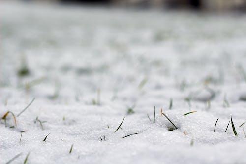 Foto d'estoc gratuïta de blanc, bokeh, herba, hivern