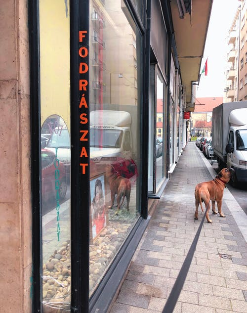 Free stock photo of bullmastiff, city, city center