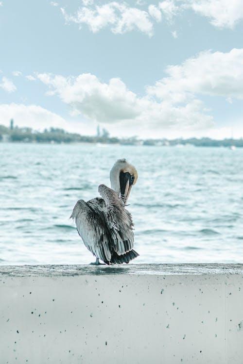 Kostenloses Stock Foto zu blaues meer, draußen, flügel, fokus