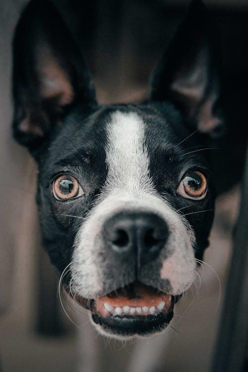 Бесплатное стоковое фото с глаза, домашнее животное, домашний, животное