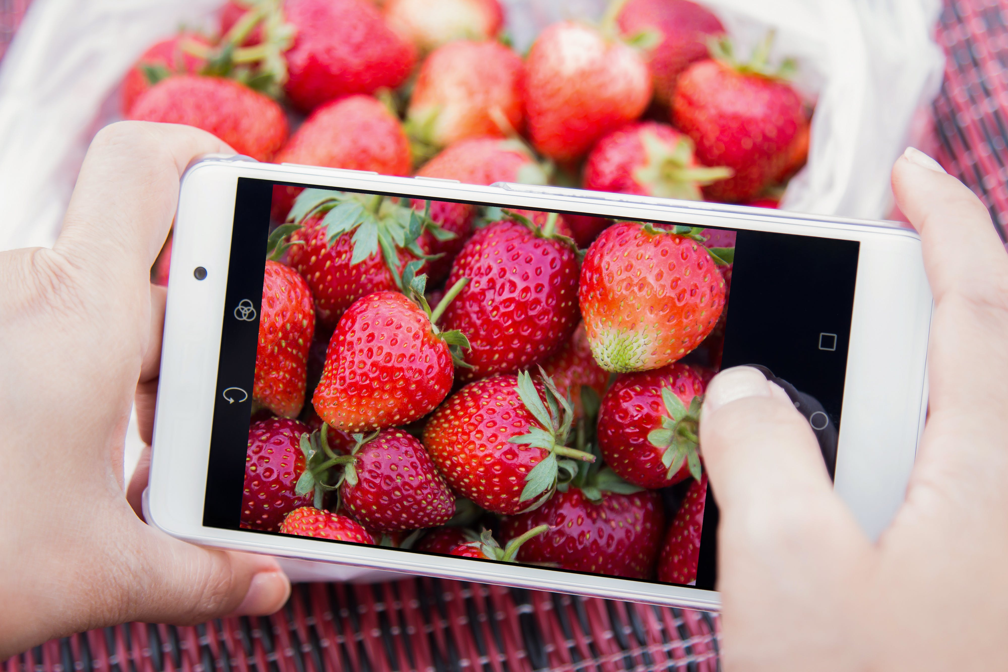 Person Capturing Photo of Red Strawberries