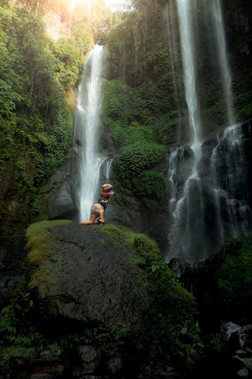 Základová fotografie zdarma na téma bali, bláznivý, cestování, denní světlo