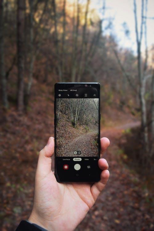 Imagine de stoc gratuită din afișaj, aparat, aparat de fotografiat, arbore