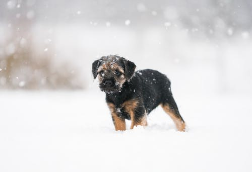 Photo of Puppy On Snow