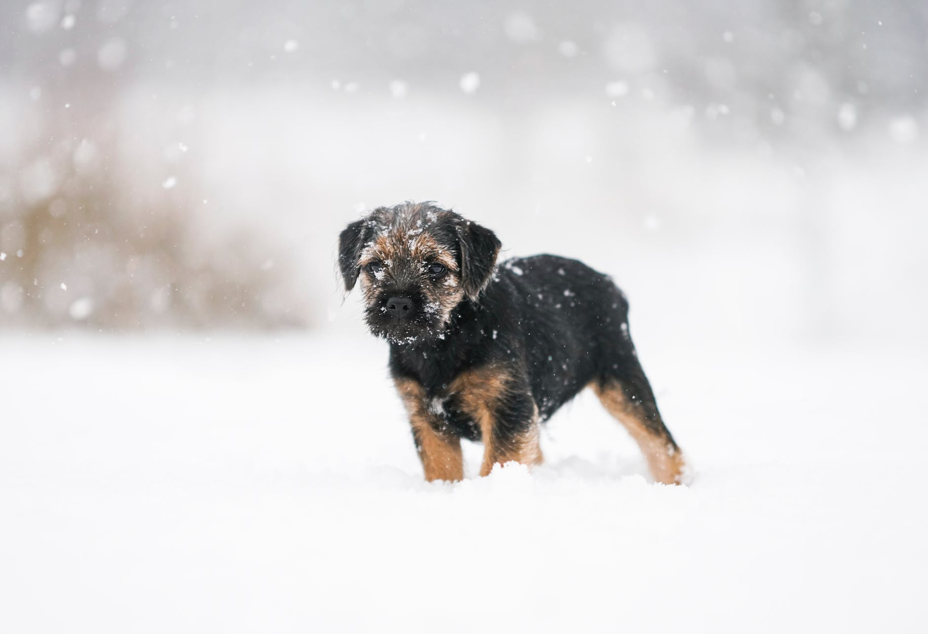 Tidak kalah dari Hachiko, ini 7 fakta anjing setia bernama Bobby