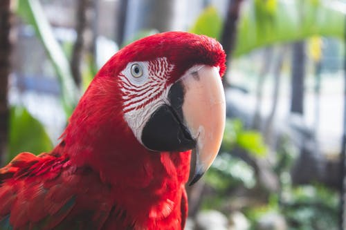 Selective Focus Close-up Photo of Red Macaw