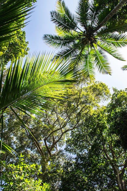 Immagine gratuita di alberi, sfondo 4k