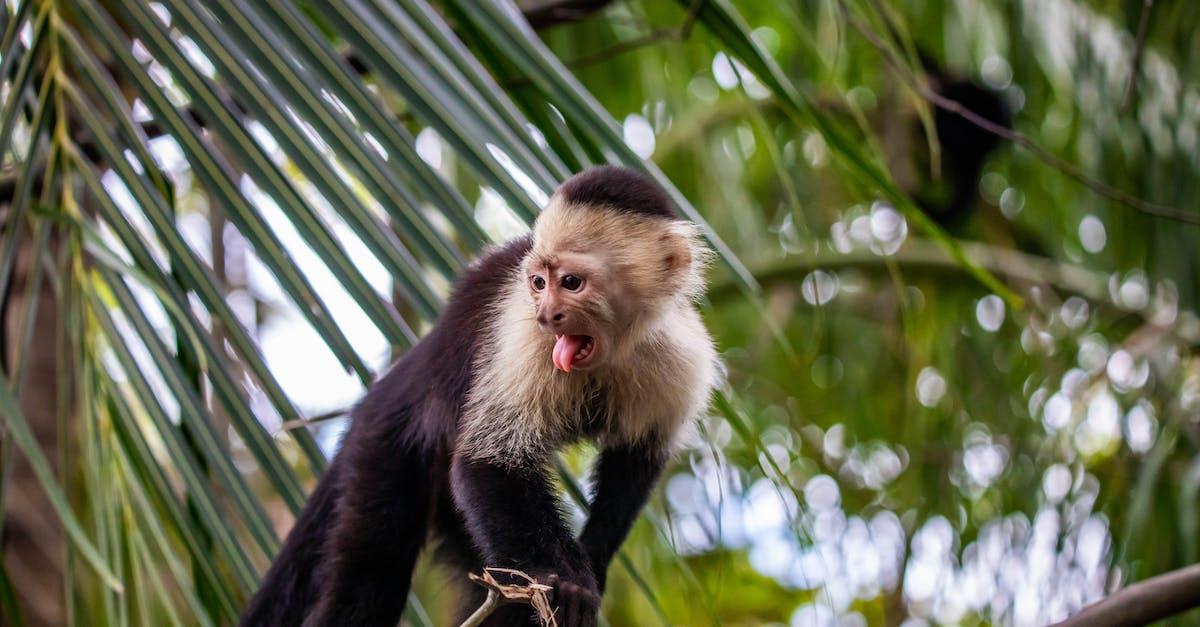 картинки диких обезьян исторических памятников