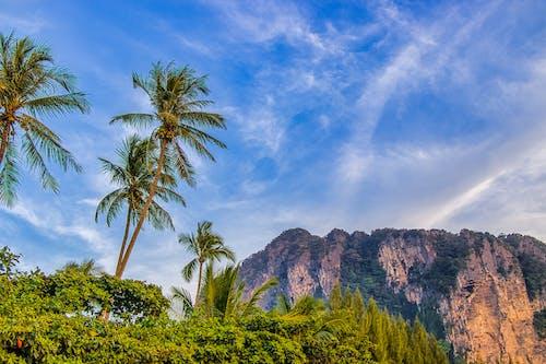 Ilmainen kuvapankkikuva tunnisteilla Krabi, matkustaa, palmut, paratiisi