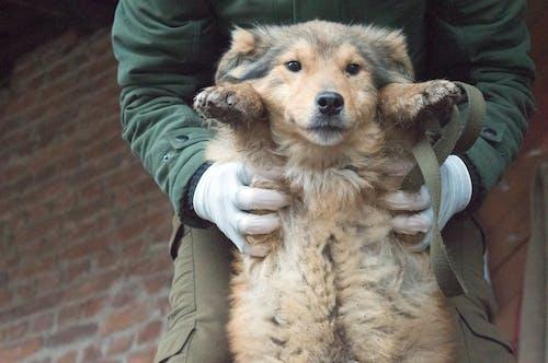 Free stock photo of cute, dog, shelter, sweet
