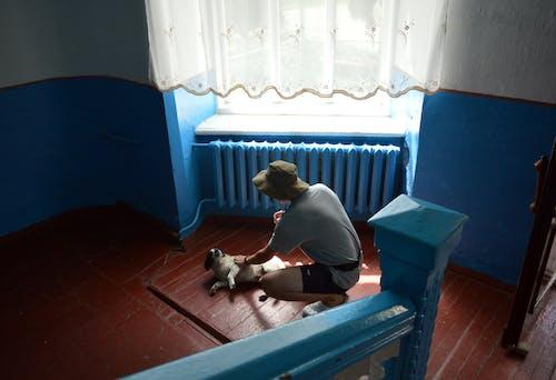 Free stock photo of dog, house, old, schevchenko