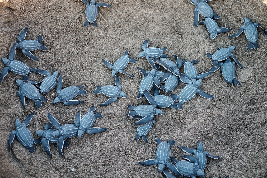 A Group Of Blue Sea Turtles
