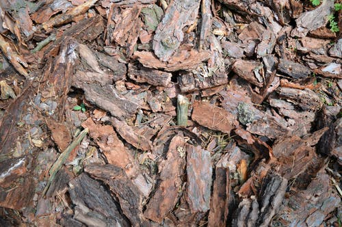 Free stock photo of free, pattern, plant, wood