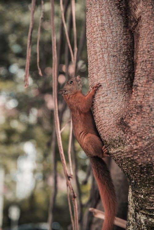 Foto profissional grátis de árvore de maçã, castanho, esquilo, macieira