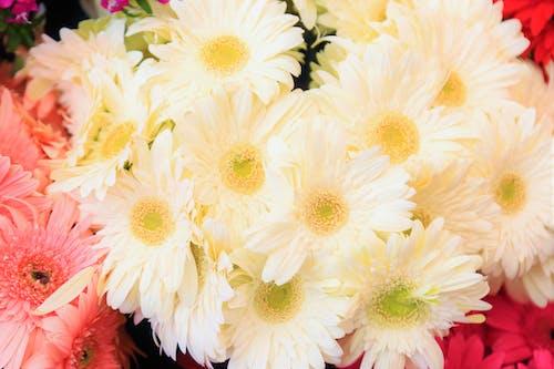 Free stock photo of bahar, çiçekler, doğa, Güzel