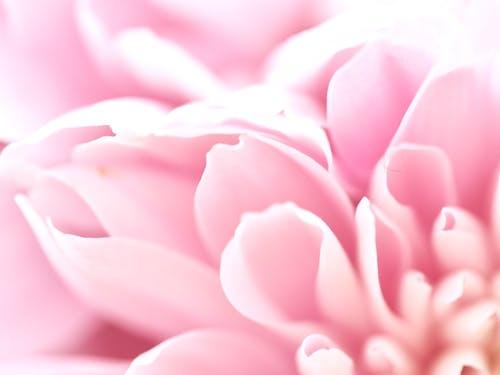 パステル, バレンタイン, ピンク, フェミニンの無料の写真素材