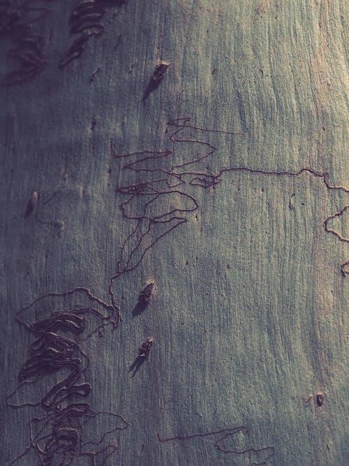 アート, すすけた, ダーク, テクスチャの無料の写真素材
