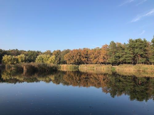 Free stock photo of autumn colors