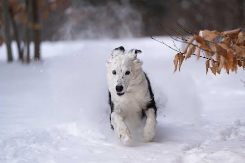 Δωρεάν στοκ φωτογραφιών με χειμερινό παιχνίδι χιονιού σκυλιών