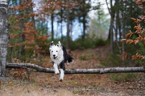 Δωρεάν στοκ φωτογραφιών με dog collie συναυλία φόρεμα φθινόπωρο φθινόπωρο