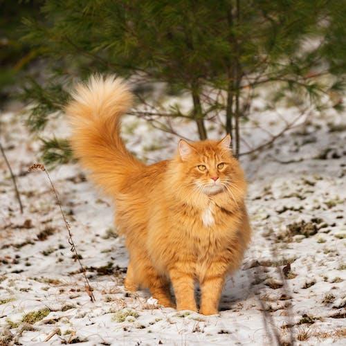 Δωρεάν στοκ φωτογραφιών με cat winter χορός πορτοκάλι