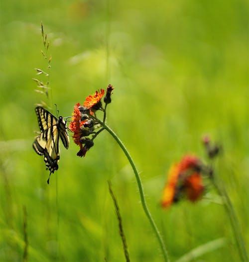 Δωρεάν στοκ φωτογραφιών με πεταλούδα άνοιξη λουλούδι