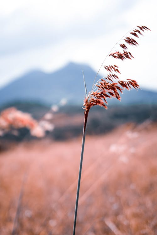 Free stock photo of beauty in nature, fall, field, grass