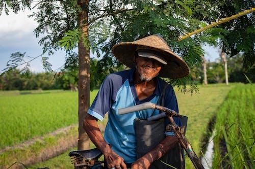 Imagine de stoc gratuită din agricultură, bătrân, cultură, fermă