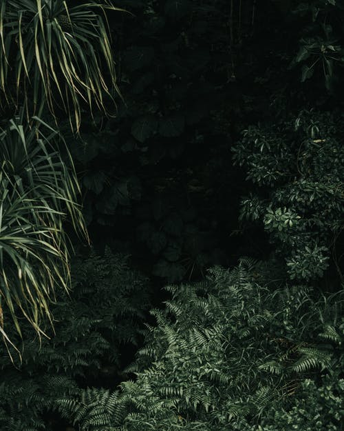 Безкоштовне стокове фото на тему «вродлива, вродливий, Гаваї, дерева»