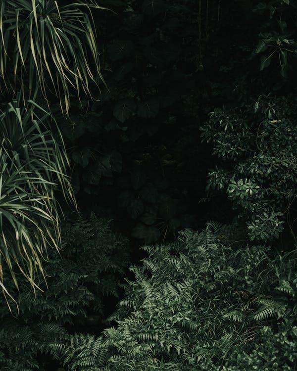 blader, bregne, bregneblader